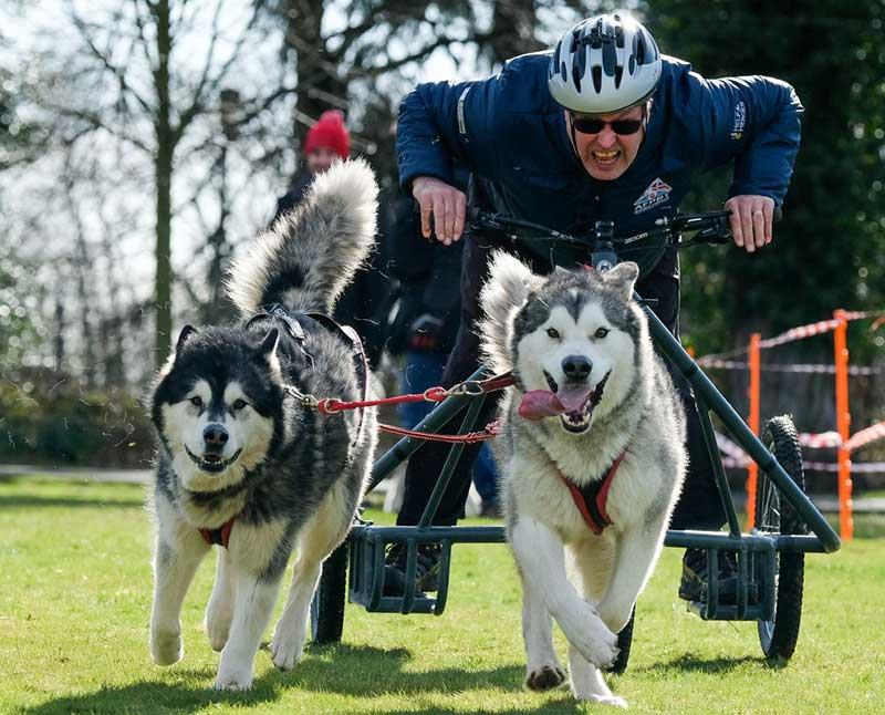 Dog Sledding - Phoenix House Winter Games